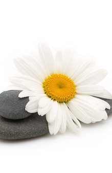 카밀레 꽃과 흰색 배경으로 균형 잡힌 된 스파 돌.