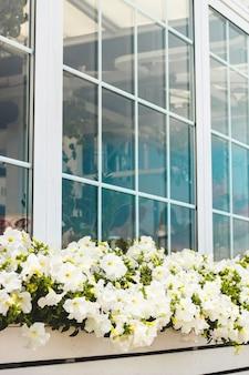 팔레트와 정원 꽃 pelargonium으로 발코니 및 창 장식.