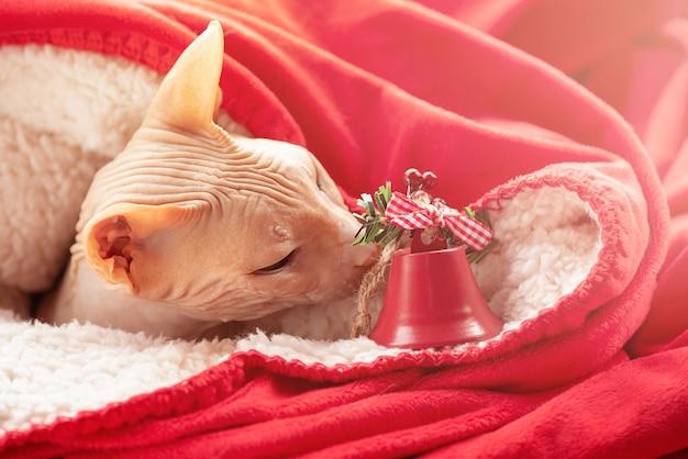Лысый кот породы сфинкс и рождество. кот с новогодней игрушкой, елочным орнаментом.