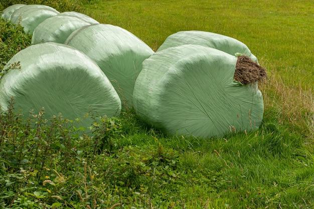 밀짚 사료 건초 건초 또는 알팔파의 베일 또는 베일 묶음