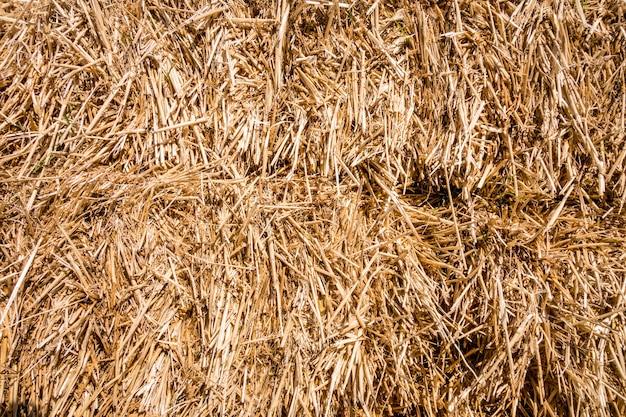 Bale of straw texture background. abstract wallpaper