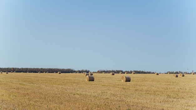 Bales of hay on a farm with summer blue sky.