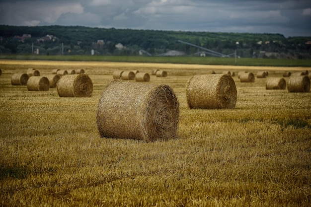 Bales of hay in the field. a stack of hay. straw in the meadow. wheat harvest in summer. the natural landscape of the countryside. grain crop, harvesting.