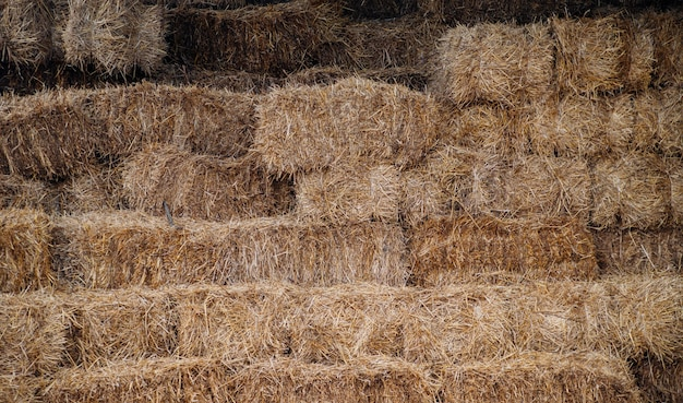 Bales of hay or straw are stacked with a wall. agriculture and farming.