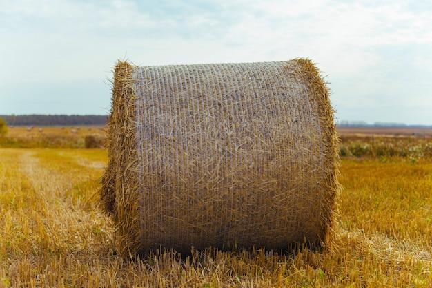 여름 푸른 하늘이 농장에서 건초 bales.