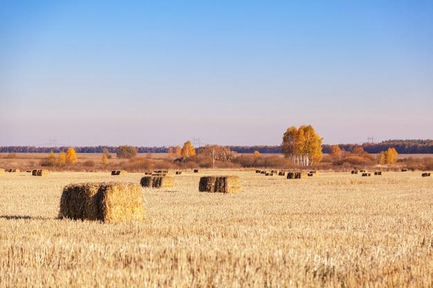 収穫後、畑に干し草の俵が散らばっていた