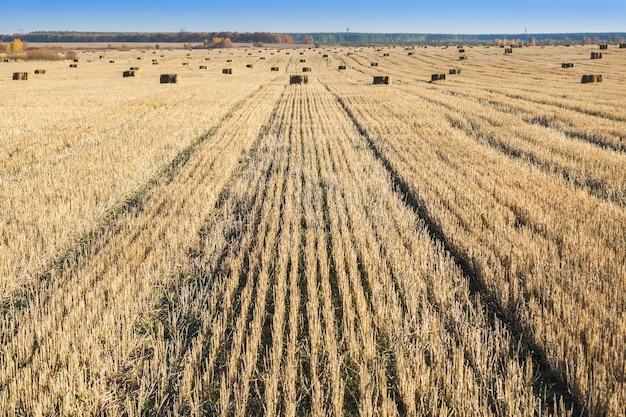 Тюки сена разбросаны по полю после уборки урожая