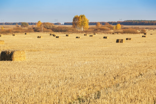 収穫後、干し草の俵が畑に散らばっていました。