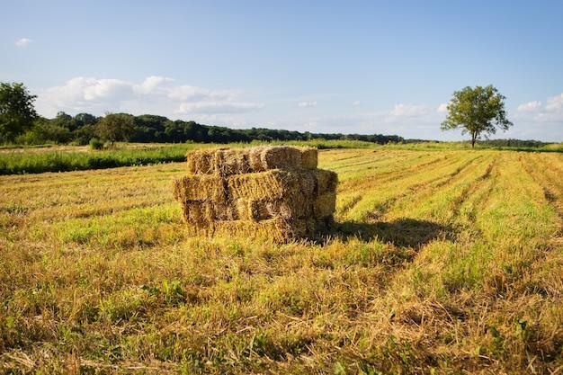 Тюки соломы на сельскохозяйственных угодьях