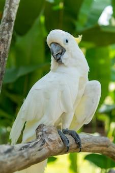 Bali bird park in sanur