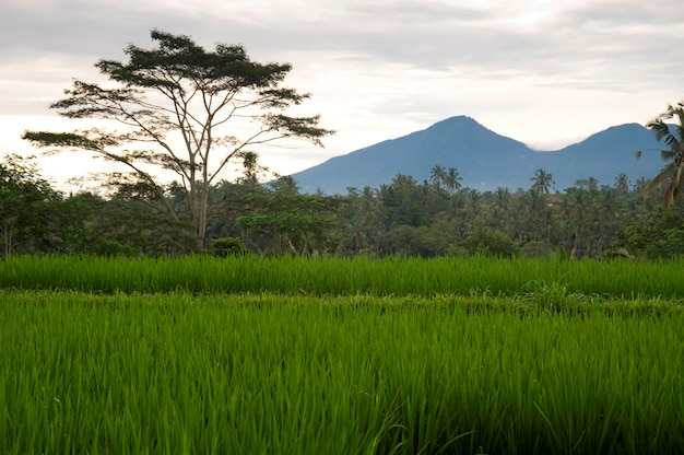 Bali lanscape