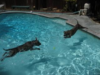 Teach Your Pup to Swim for Fun and Exercise
