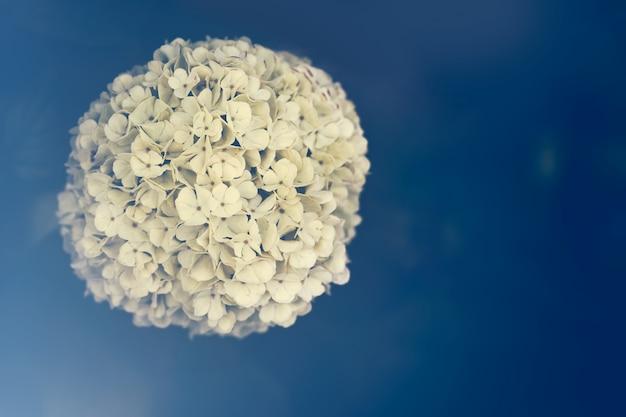 青色の背景にある花のボール