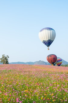 Balloon in the cosmos flowers farm
