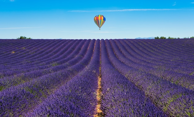 Balloon flying over the lavender fields of valensole in france