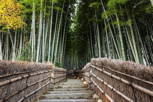 Bambo grove landmark in arashiyama