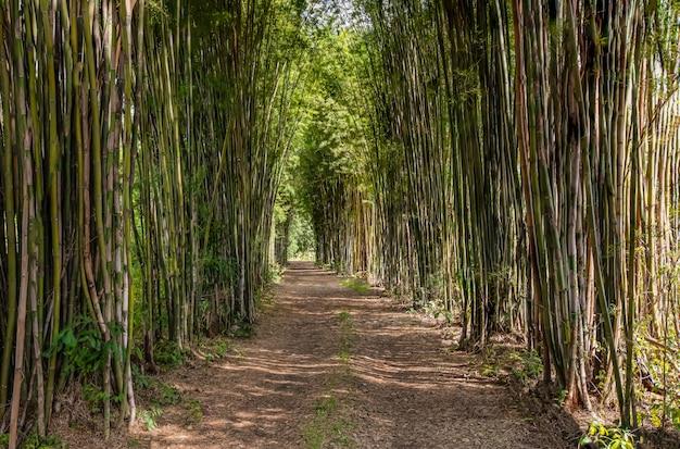 竹のアーチ、道路、午後の光