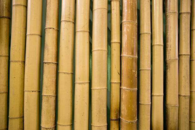 Бамбук фон