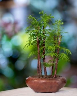 セラミックポットの竹盆栽