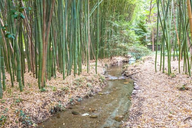 竹の植物園。禅、環境、緑の生活に役立つコンセプト。