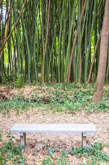 Bamboo botanical garden. useful concept for zen, environment and green life.