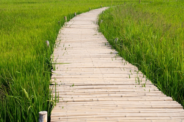Bamboo bridge pathway in rice field asian agriculture