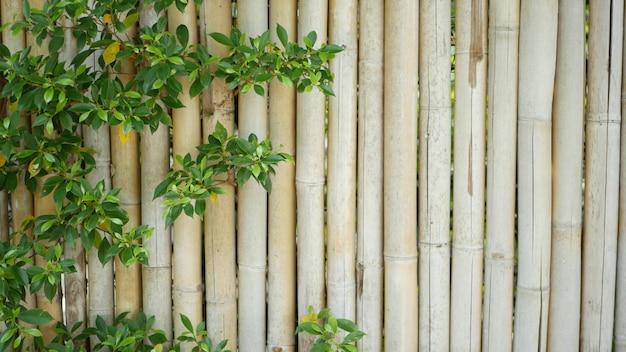 Бамбуковый забор в окружении пышной растительности. прочный бамбуковый забор и ярко-зеленые кусты в таиланде.