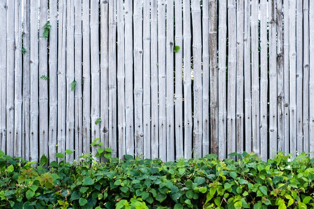 Bamboo fence wall background and texture with green plant decoration.