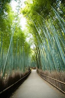 Бамбуковый лес арасияма, киото япония