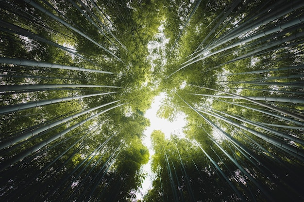 Бамбуковый лес в арасияме, япония