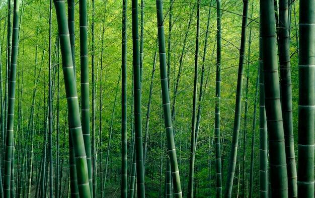 中国の竹林