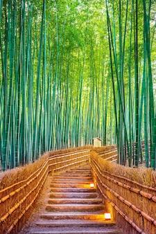 Foresta di bambù a kyoto, in giappone.
