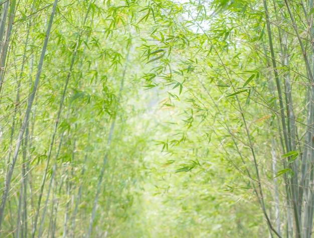 Бамбуковый лес с естественным освещением в стиле размытия желто-зеленые листья бамбука с естественным узором