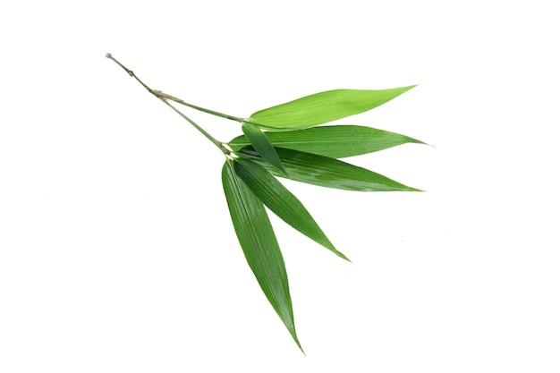 Bamboo leaf isolated on white background