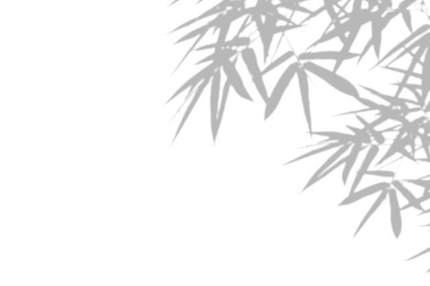 白い壁の背景に笹の葉の影。空白のコピースペース。