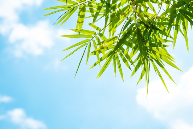 Bamboo leaves and blue sky