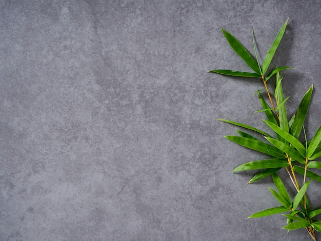 Bamboo leaves on gray background.