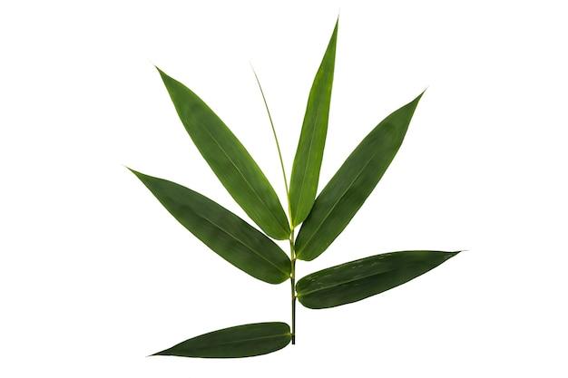 白い背景で隔離の笹の葉