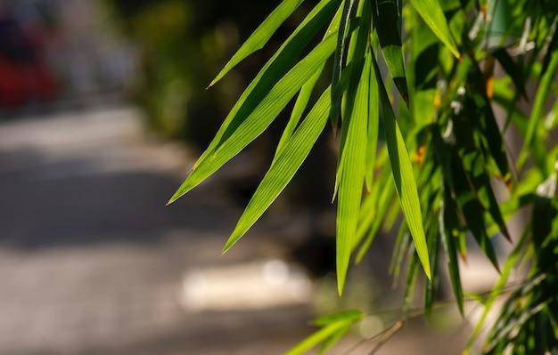 자연 벽지를 위해 흐릿한 배경에 대나무 잎