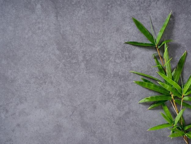 Листья бамбука на сером фоне.