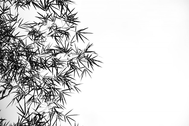 Bamboo leaves on pale white background monochrome