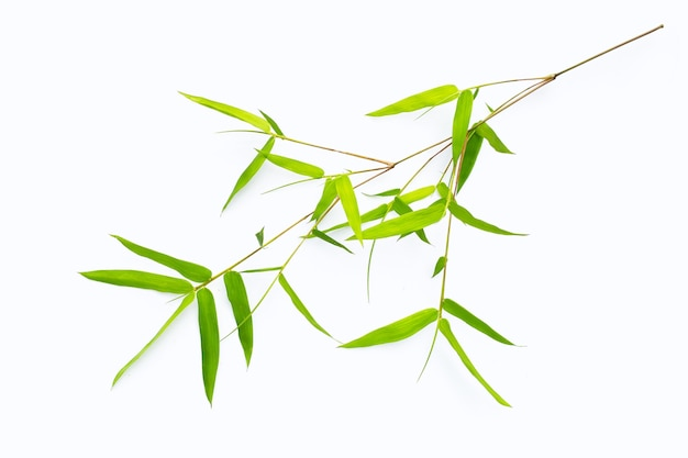 Bamboo leaves on white background.