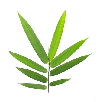 Bamboo leaves on a white wall