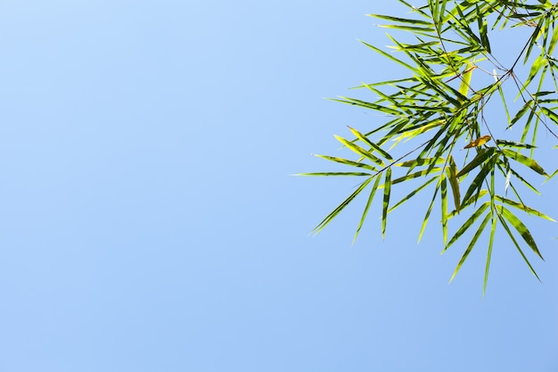 Бамбуковые листья.