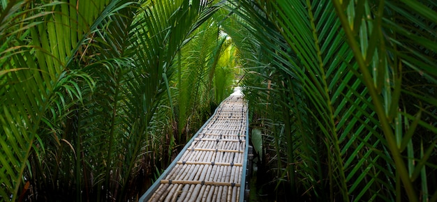 The bamboo pathway in mangrove