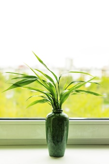 Bamboo plant dracaena sanderiana in green vase on room window sill on blurred city natural background. close up. selective focus. copy space