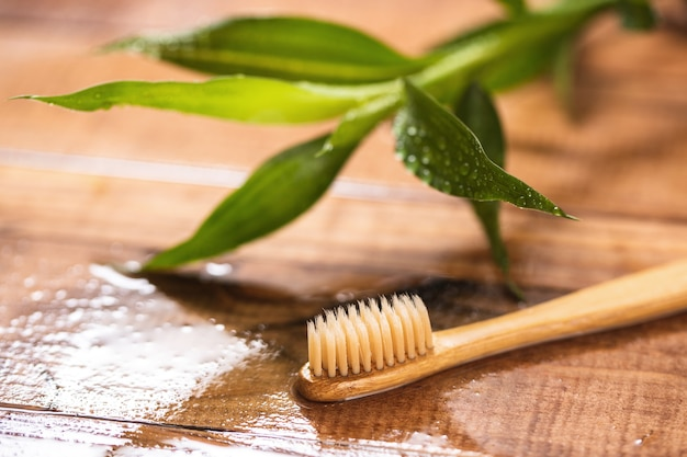Bamboo plant and eco-friendly toothbrush on the wooden surface