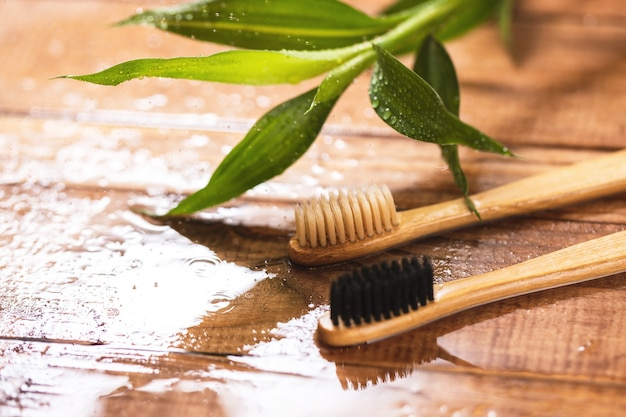 Bamboo plant and eco-friendly toothbrushes on the wooden surface