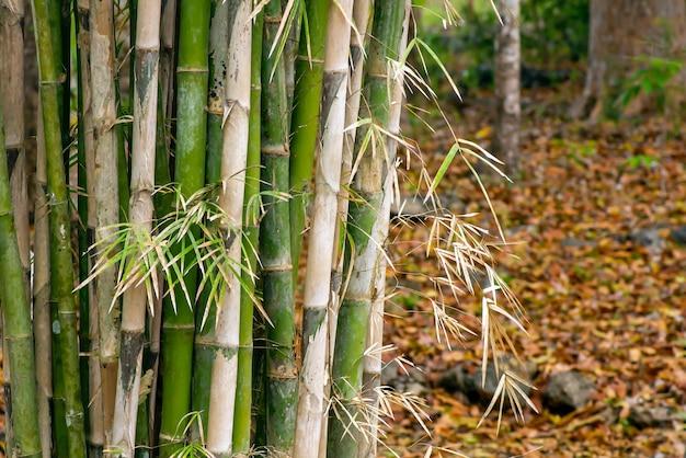 자연 배경 및 벽지용 대나무 식물