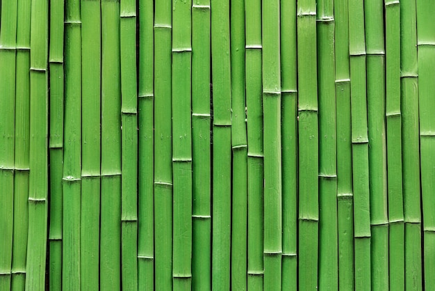 Zattera di bambù